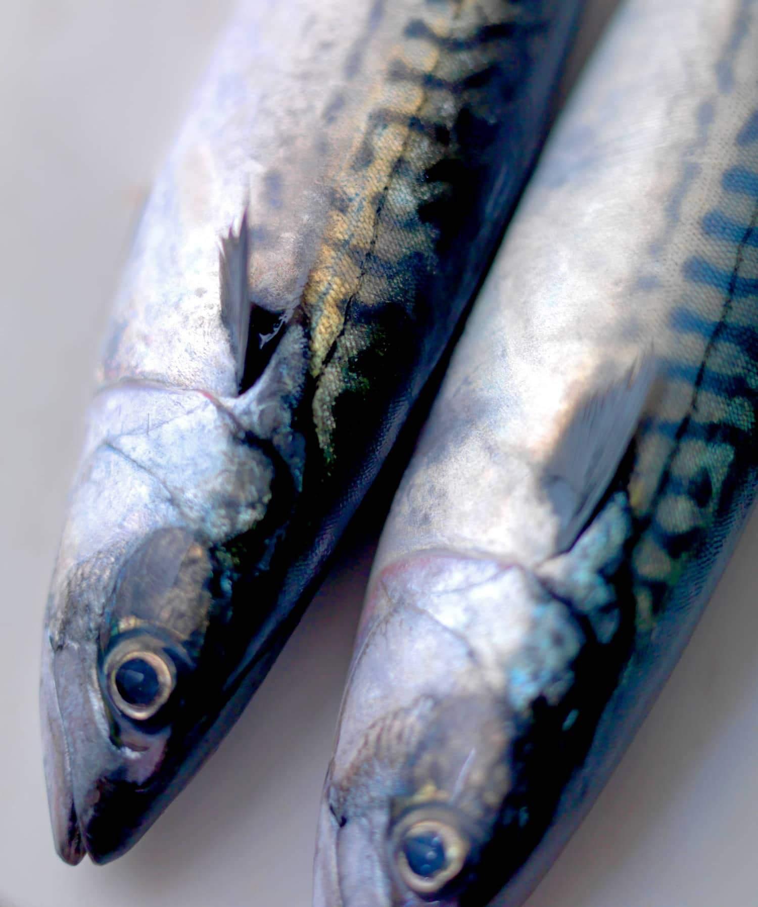 Hel, rund makrell