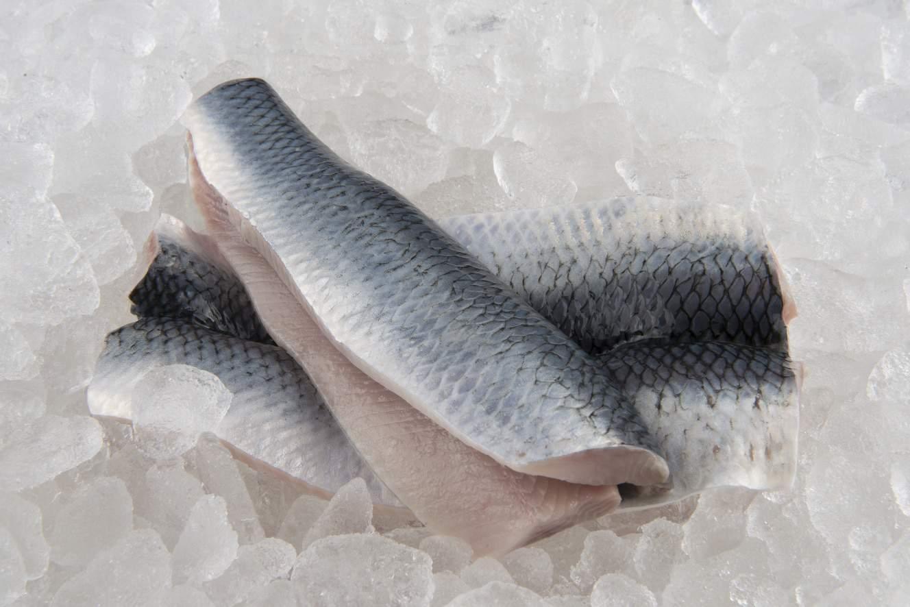 Fersk filet av sild fra Nord-Norge på is